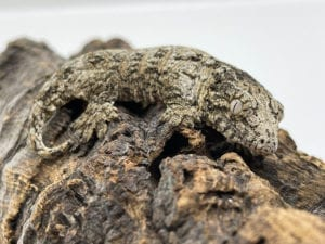 Mt Koghis x Nuu Ami Leachianus Gecko 6.5g CB21