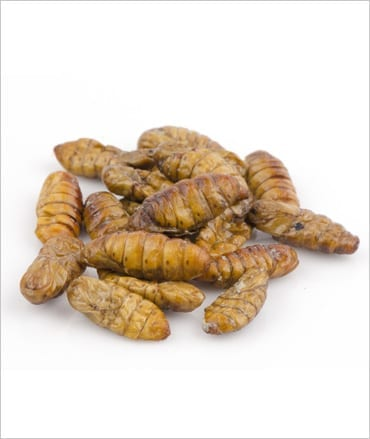 Calci Worms Small Pre Pack