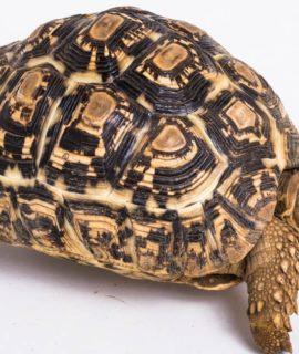OUR large deep Tortoise vivarium kit