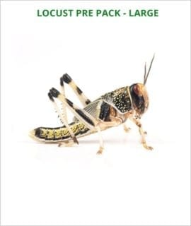 Locusts pre pack Large