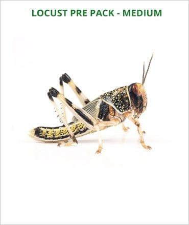 Locusts pre pack Medium
