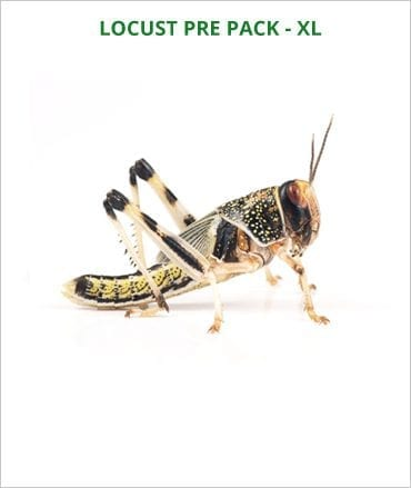 Locusts pre pack Extra Large